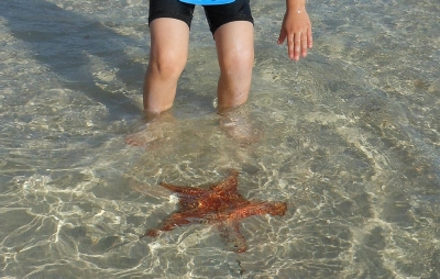 Fun at nearby starfish point.