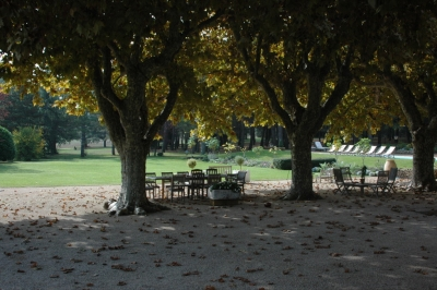 210 year old Plane Trees+teak dining/seating